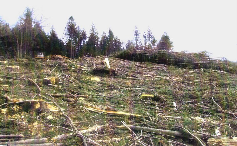 Savoy_Maine_clearcut.jpg